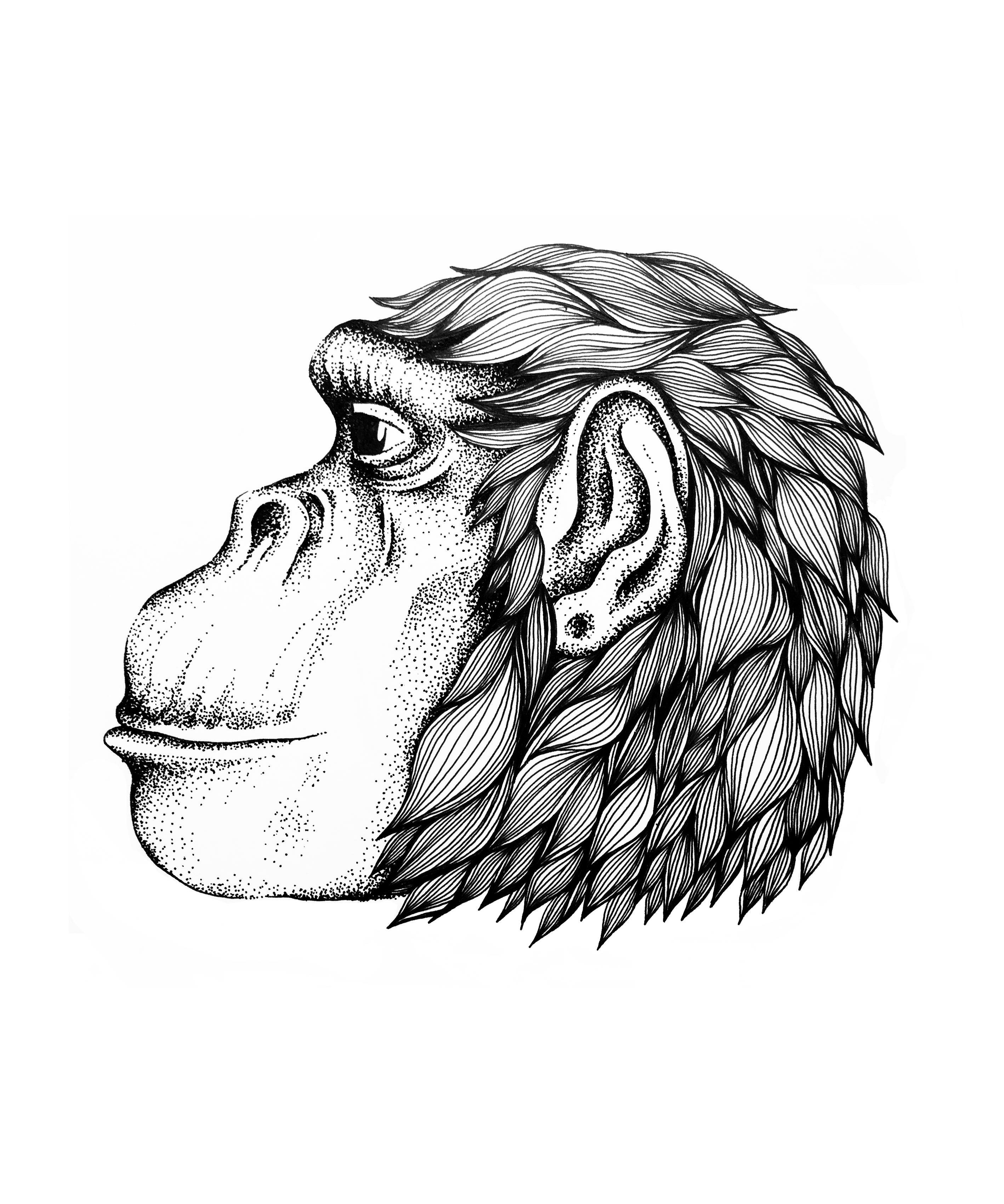 Ape_2